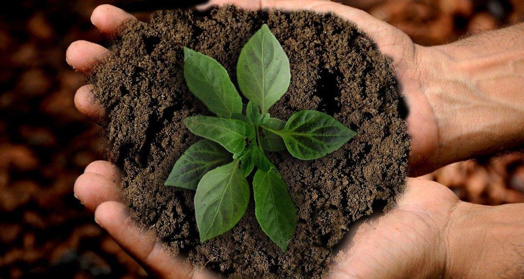 Ecologia integrale e cura della terra